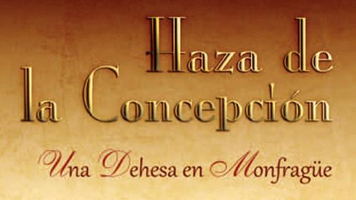 hazaConcepciont